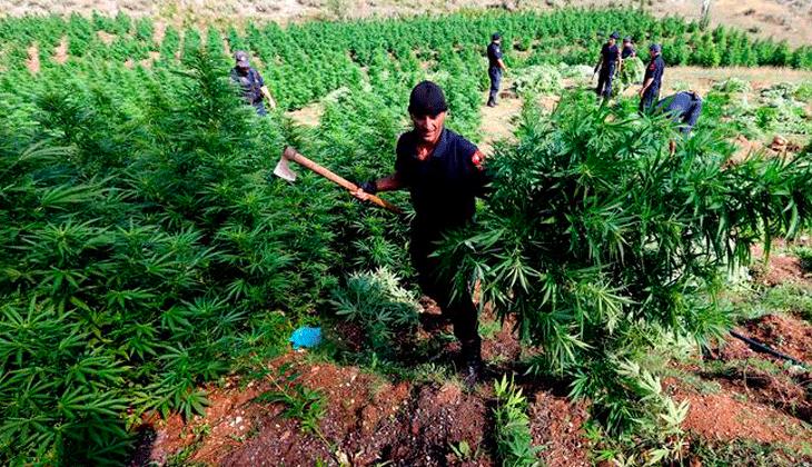 Haravgi Ioannina: el pueblo griego por el que pasa la mayor ruta de trafico de marihuana en Europa.