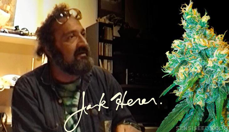 ¿Quien es Jack Herer? Os contamos mas sobre el activista de marihuana que tiene una variedad con su nombre